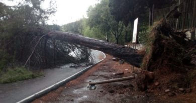 Cortada al tráfico la carretera del Desert por la caída de un pino