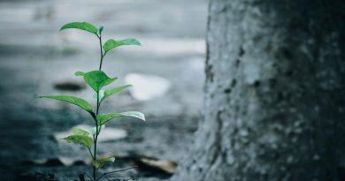 VOX propone la creación del 'Bosque de los Niños' en Benicàssim